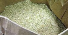 魚沼産の美しい玄米