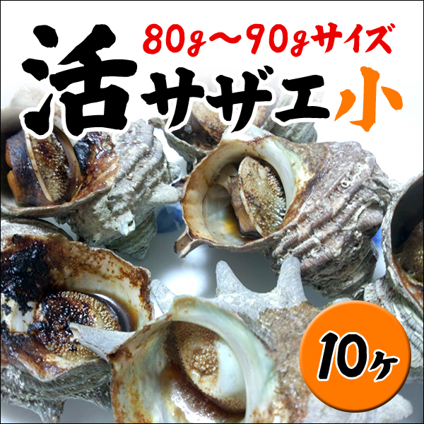 活サザエ10ヶ(80g~90gサイズ)