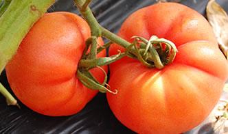 写真-トマト