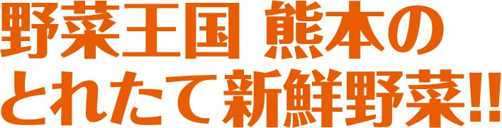 野菜王国熊本のとれたて新鮮野菜!!
