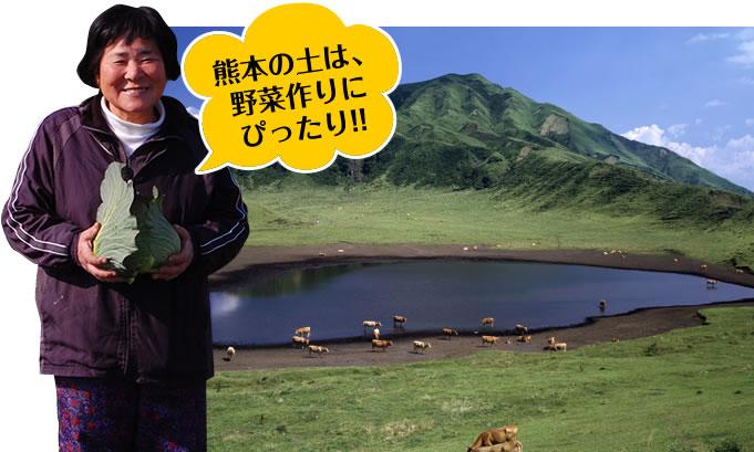 熊本の土は、野菜作りにぴったり!!