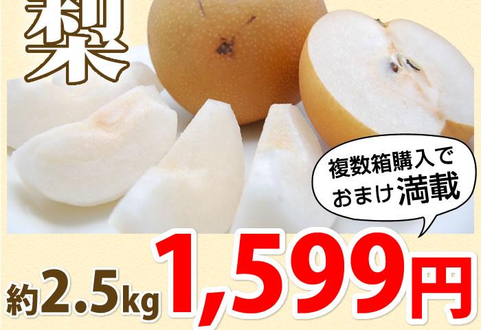 2.5kg 1599円