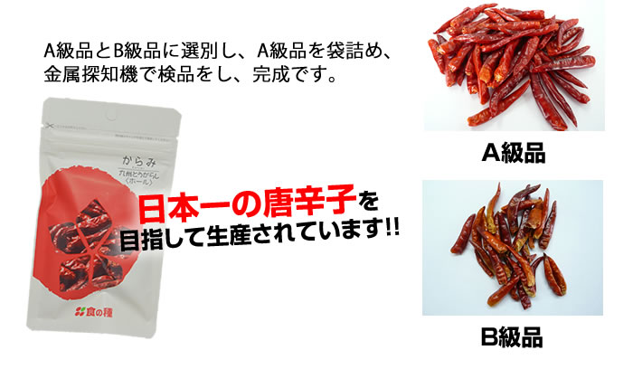 日本一の唐辛子を目指しています