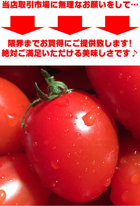 アイコ ミニトマト とまと 愛知 送料無料 通販 お取り寄せ ギフト 贈答用