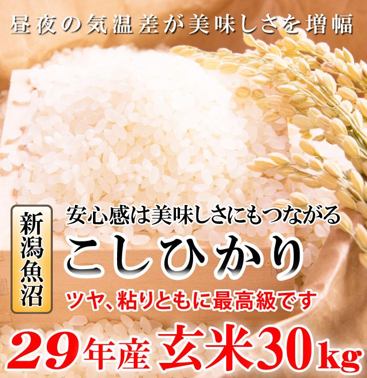 こしひかり コシヒカリ 玄米 米 新潟 魚沼 直送 送料無料 通販 お取り寄せ