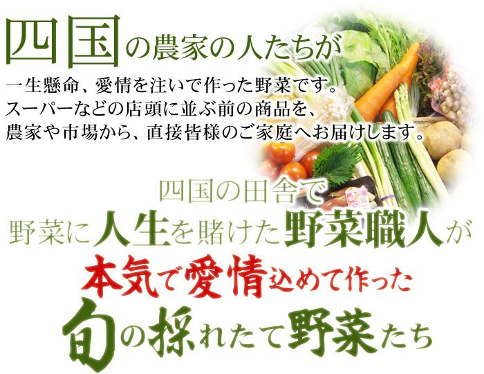 野菜に人生を賭けた野菜職人が本気で愛情込めて作った旬の採れたて野菜たち