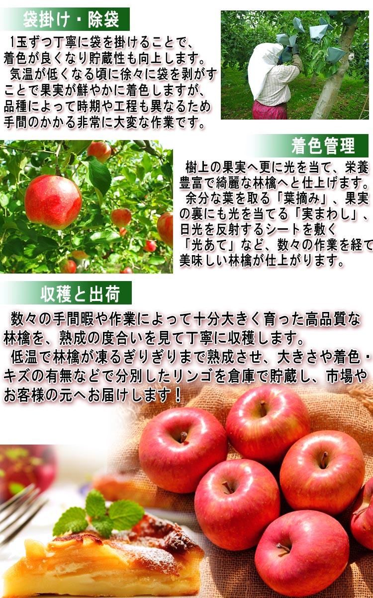 りんご 送料無料