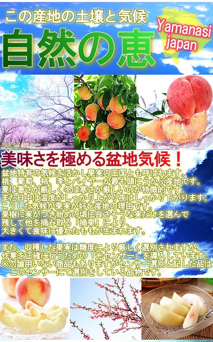 桃 ギフト
