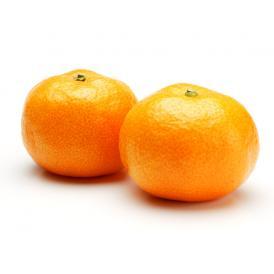 愛媛県オリジナルの高級柑橘