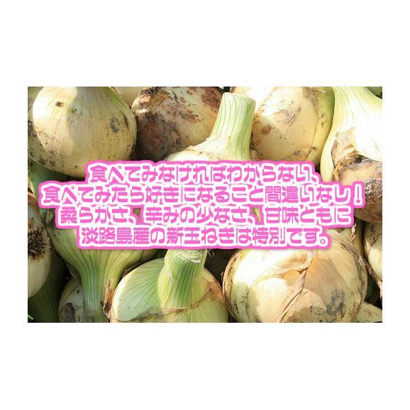 【兵庫県淡路島産】訳あり新玉ねぎ 大きさおまかせ 約10kg【常温便送料無料】(北海道沖縄別途送料加算)産地直送仕入れ/あわじしま/淡路島/お土産/たまねぎ/タマネギ/玉葱/玉ネギ/サラダ/スープ/中02