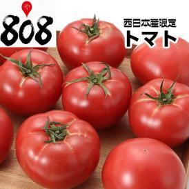 【西日本産】超ビッグサイズ トマト 1箱 12~16玉入【送料別】