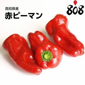 【高知県産】赤ピーマン 1パック 約500g【野菜詰め合わせセットと同梱で送料無料】【送料別】