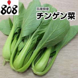【兵庫県産】チンゲン菜 1パック 約200g【野菜詰め合わせセットと同梱で送料無料】【送料別】