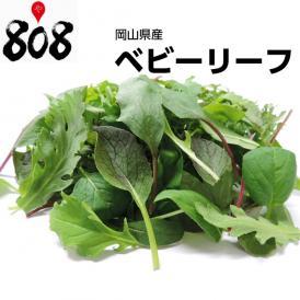 【岡山県産】ベビーリーフ 1パック 約40g【野菜詰め合わせセットと同梱で送料無料】【送料別】