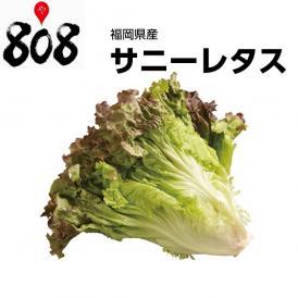 【福岡県産】サニーレタス 1パック 約300g【野菜詰め合わせセットと同梱で送料無料】【送料別】
