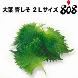 【愛知県産】大葉 青しそ あおじそ 2Lサイズ 1パック約100g 100枚入【送料別】