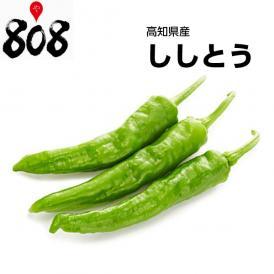 【高知県産】ししとう 1パック【野菜詰め合わせセットと同梱で送料無料】【送料別】