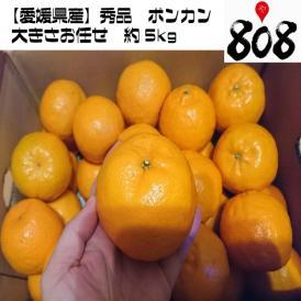 【送料無料】【愛媛県産】秀品 ポンカン 大きさおまかせ 約5kg