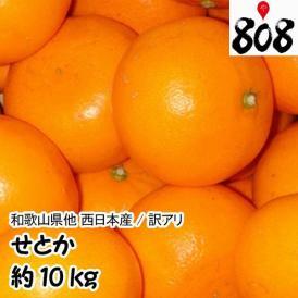 【西日本産】訳あり せとか 大きさおまかせ 約10kg(北海道沖縄別途送料加算)