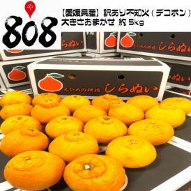 【送料無料】【愛媛県産】訳あり 不知火(デコポン) 大きさおまかせ 約5kg