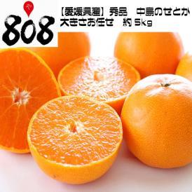 【愛媛県産】秀品 中島のせとか  大きさお任せ 約5kg