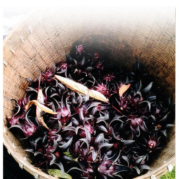 ロセラティ(ロセラティー,ロゼラティ,ロゼラティー)ハイビスカスティ ハイビスカス茶 ハーブティ100個入り02