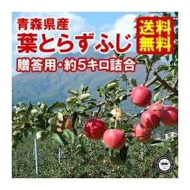 葉とらずりんご ふじ 林檎 贈答用 約5kg 14〜18玉入り 青森県産 送料無料
