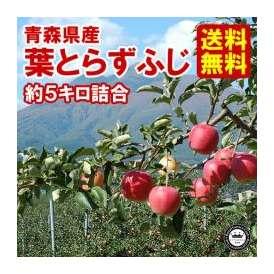 葉とらずりんご ふじ 林檎 ご家庭用 約5kg 14~18玉入り 青森県産 送料無料