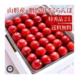 さくらんぼ 紅秀峰 べにしゅうほう 約500g 特秀 2Lサイズ 山形県産 手詰め 化粧箱入り 送料無料