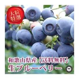 生ブルーベリー 和歌山県産 特選 大粒100g×6パック入り 送料無料