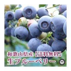 生ブルーベリー 和歌山県産 特選 中粒100g×6パック入り 送料無料