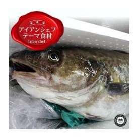 アイアンシェフで料理の鉄人も大絶賛の恵山特大真鱈(まだら)  真子(まこ)たっぷりメス1尾(約5kg以上) 北海道函館産