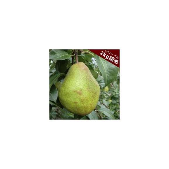 西洋梨シルバーベル約2kg(4~8玉入り)長野県小布施町産浪漫豊果(ろまんほうか)化粧箱入り送料無料