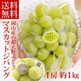 マスカットジパング ぶどう 超大粒 1房 約1kg 岡山県産 化粧箱入り 葡萄 送料無料
