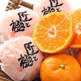 みかん 中島便り 匠と極 愛媛県産 蜜柑 約1.5kg 9〜15玉前後 送料無料