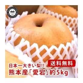 愛宕梨(あたごなし) 熊本県産 約5kg(5~9玉入り) 送料無料 芳野の日本梨 日本一大きい梨