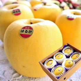 岩手で見つけた黄金色の美味しいりんご、はるかをお届け!