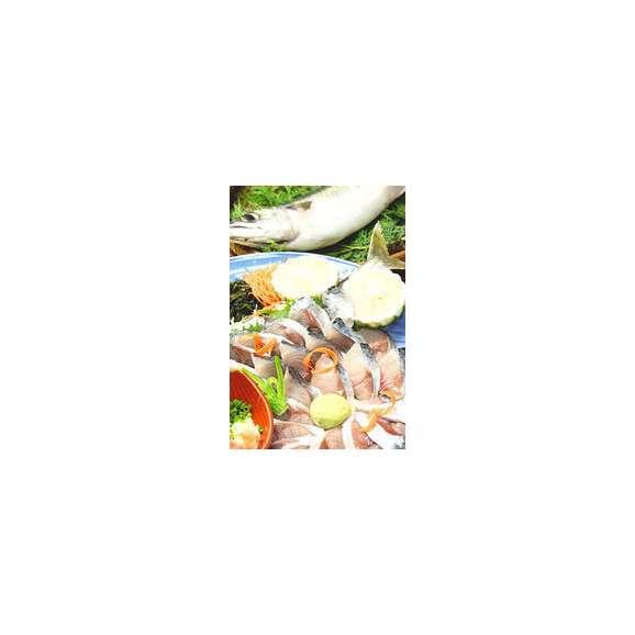 関さば (関サバ) 姿造り 大分県産 1尾(400g前後) 送料無料 一流ブランド魚02