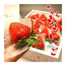 【送料無料】超希少品!プレミアム中のプレミアムな苺「さくらももいちご」16〜24粒