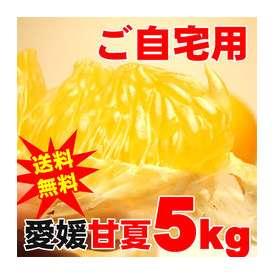 【訳あり・ご自宅用】愛媛産甘夏(あまなつ)5キロ!ちょうど良いサイズ