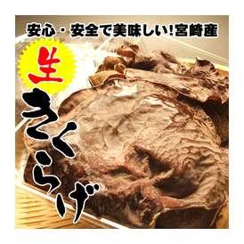 【希少な国産!農薬不使用】宮崎県産の生きくらげ300g