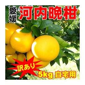 【送料無料】【ご自宅用】愛媛産河内晩柑(かわちばんかん)5キロ詰め
