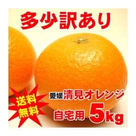 【今だけ送料無料】【ご自宅用】愛媛産清美オレンジ5キロ満杯詰め