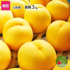 【送料無料】山形県産 黄桃 3kg(10~16玉前後)