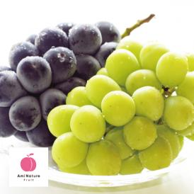 アミナチュールフルーツの旬の葡萄2色詰合せ各1房(1.3kg)