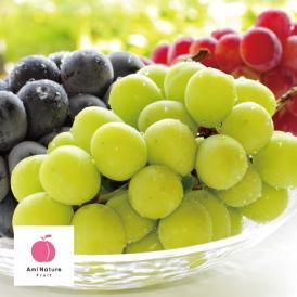 【期間限定】アミナチュールフルーツの旬の葡萄3色詰合せ各1房(2.0kg)
