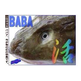 幻の深海魚、特大ババア2.0kg前後鮟鱇以上!!