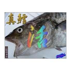 山陰境港産 超高級魚、真たら1尾3kg前後