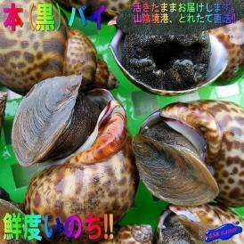 本バイ(黒バイ)1kg ばい かい カイ 貝