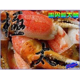 最大級、極太なずわい蟹親爪4Lサイズ1kg